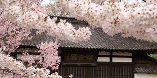 女子旅!!~桜舞う信州へ~