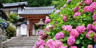 【奈良 矢田寺】御朱印と花と手拭いと