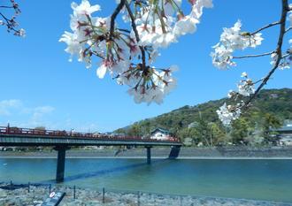 春近し~京都・山城🌸