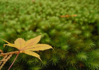 秋の紅葉、京都三千院でぶらり御朱印散歩