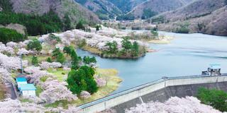 【京都】知る人ぞ知る「京都美山」おすすめ桜スポット3選