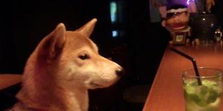 柴犬の店長ハナさんのいる渋谷のBar & さわげる学校&オタク系Bar