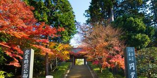 「晩秋の鎌倉」紅葉とオリジナルマイカップでカフェー