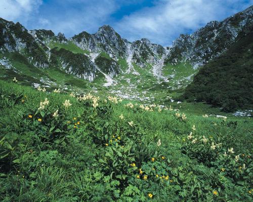 【7~8月】高山植物の宝庫中央アルプス千畳敷カール 標高2,612mへロープウェイで誰でも行ける絶景