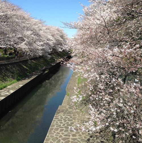 *お花見&お散歩に*ぷらっと行きたい浜田山