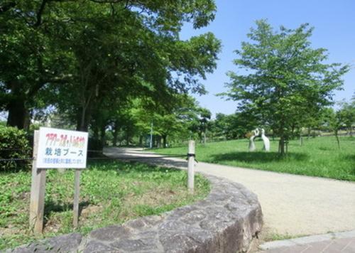 城北公園の花菖蒲を見に行こう