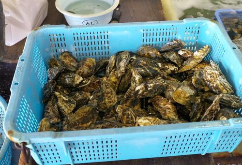 冬の名物・西播磨の牡蠣で満腹、牡蠣づくしの旅