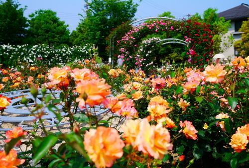 夫婦で春のバラ園へお出かけ・綾部~篠山一泊二日の旅