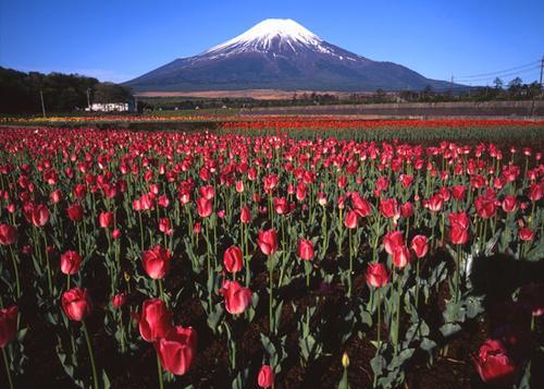 富士山と過ごす癒しのホリデー☆
