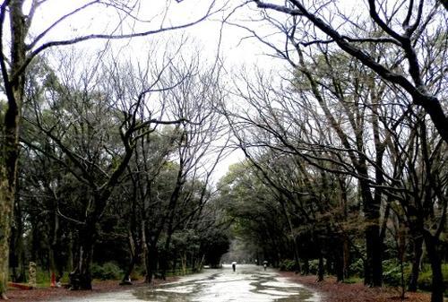 世界遺産「糺の森」でイロイロと考えてみる夕涼み