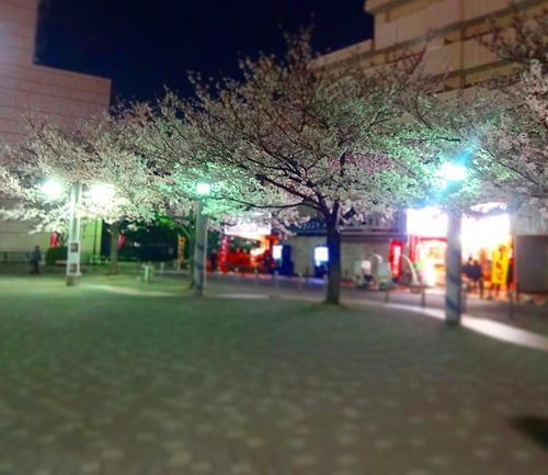 あと、3日くらいかな…。駒込は染井吉野の発祥地。桜の聖地を夜散歩☆