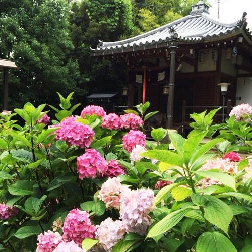 長弓寺 薬師院