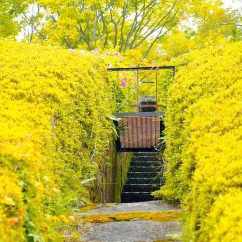 (財)滋賀県陶芸の森