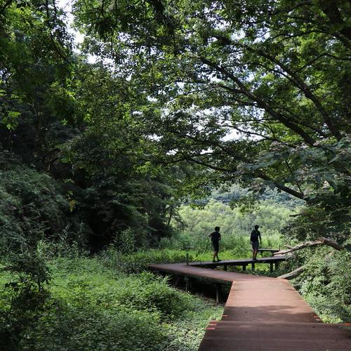 小網代の森