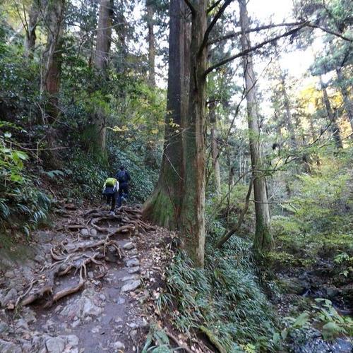 高尾山登山道 びわ滝コース