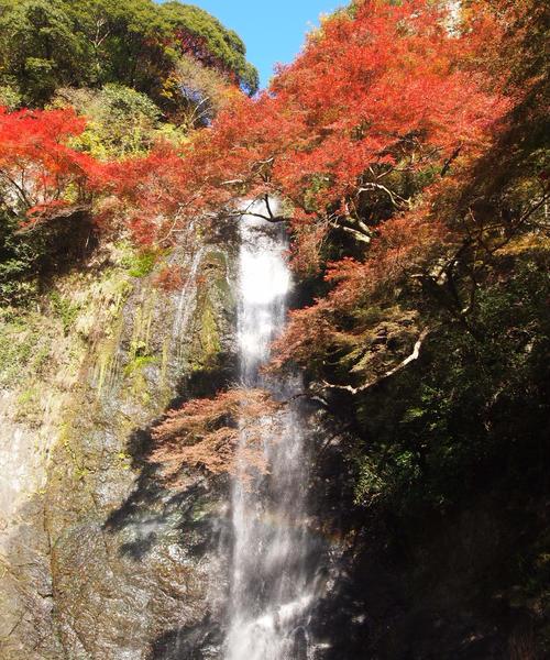 大阪 箕面市へ 紅葉を見に行こう!!
