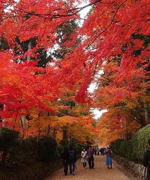 世界遺産 高野山へ 紅葉を見に行こう!!