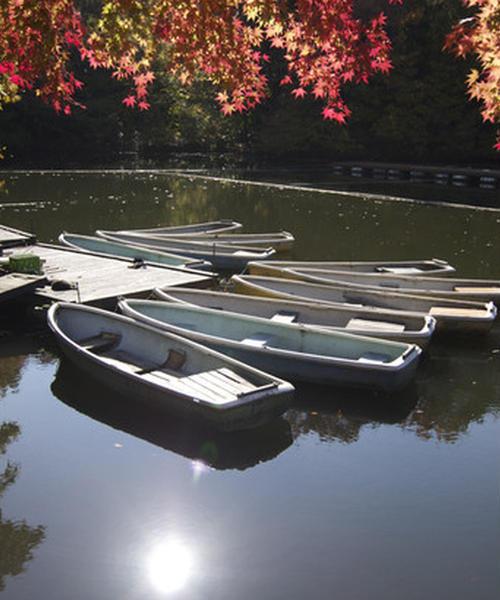 """[秦野市 震生湖周辺]紅葉を愉しんだら、帰りは美味しい""""白笹うどん""""で舌鼓♪"""