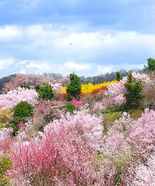 四季を楽しむ福島市〜二本松エリア