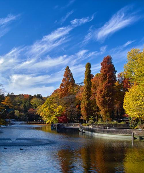 晴れた秋の日には、吉祥寺でゆるゆるデート
