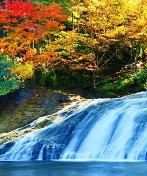 秋の養老渓谷で紅葉狩りハイキング