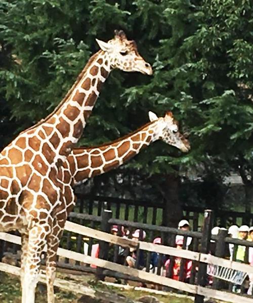 こどもが大満足な動物園