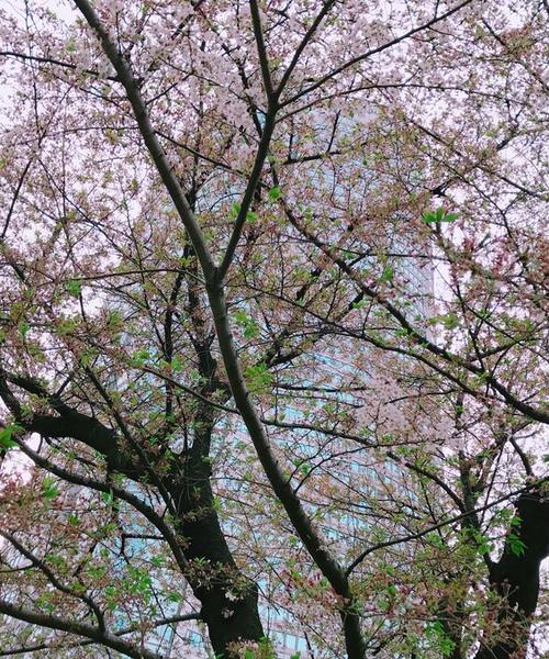 お昼からのんびり六本木