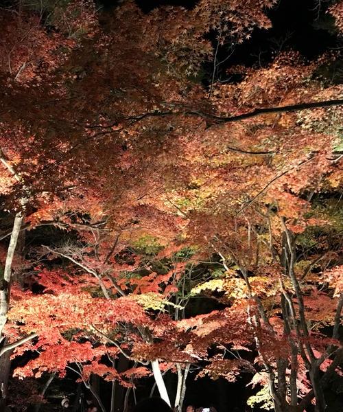 秩父で秋を感じる紅葉デート🍁
