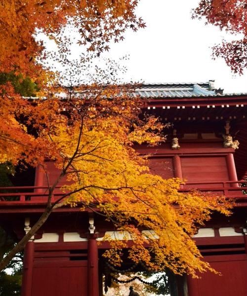 松戸で楽しむ紅葉(北小金)