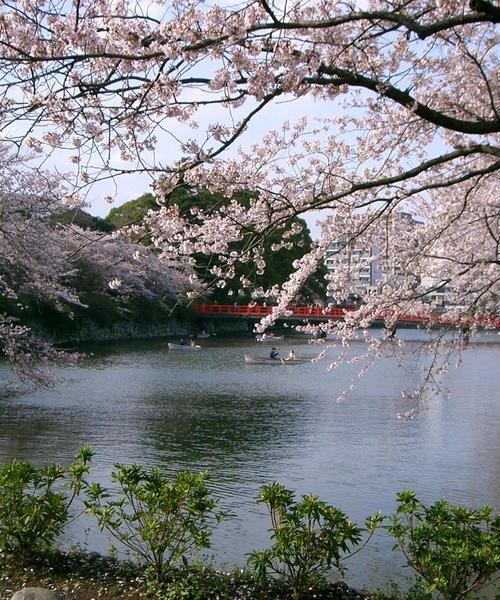 桜の時期は特にオススメ♪ 小田原城周辺の散策を楽しもう!