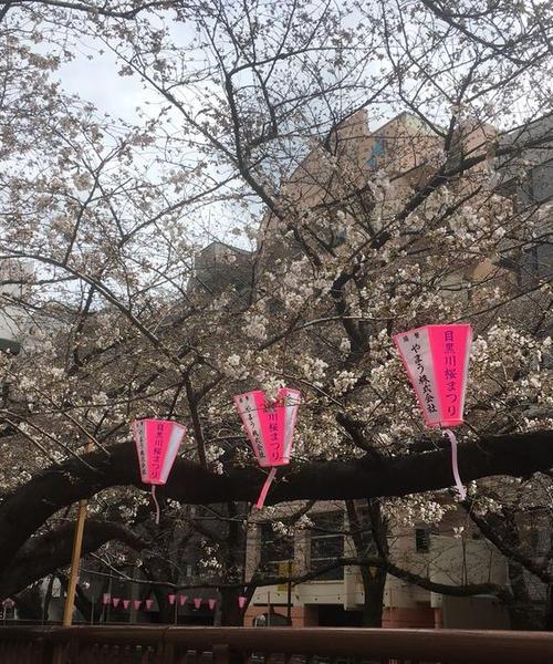 桜の季節に池尻大橋から代官山まで散歩
