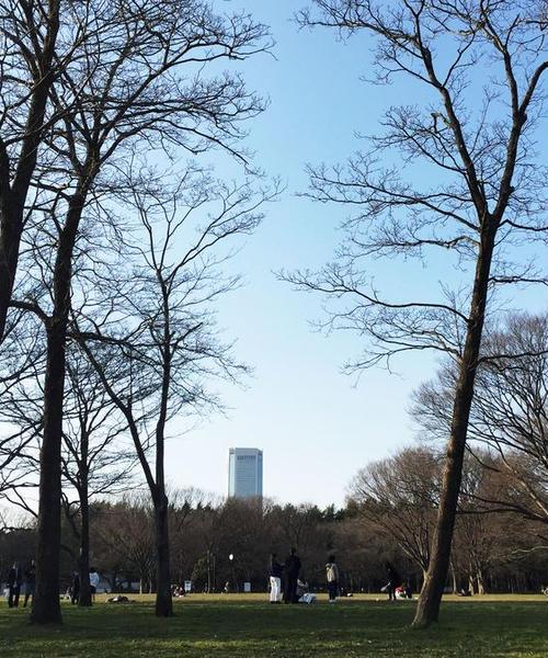 代々木公園〜原宿で春を楽しむデートプラン