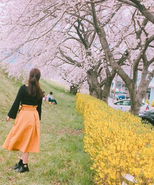 春の絶景といえば…桜並木🌸 in Nagano