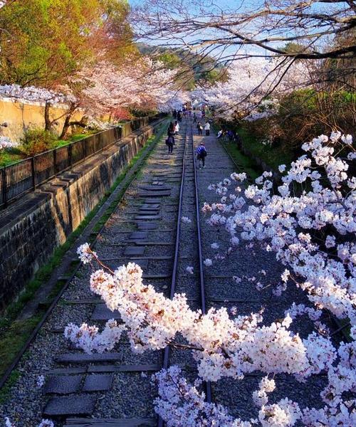 朝はゆっくり!夕方から行くゴールは夜桜京都歩き🌸