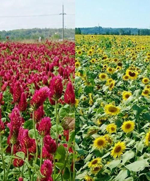 金沢近郊で壮大なお花畑に囲まれる♡ロマンチックフォトスポット!絶品スイーツも♡
