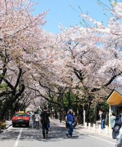 谷中霊園お散歩(シンプル)