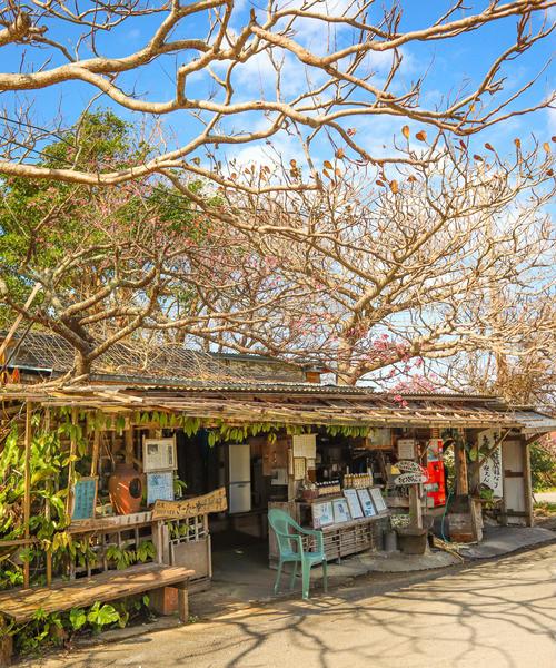 沖縄、日本一早い桜を見に行こう 北部日帰り観光 今帰仁編