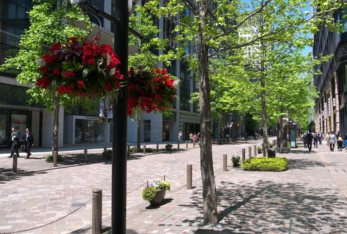 ヨーキー・レオと、有楽町から丸の内へステキな緑のなかを散歩しよう!