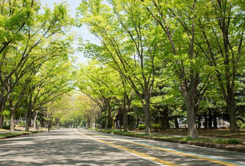 さぁ、みんなも早起きして駒沢公園に行こうよ!