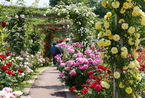 世界最大級のバラ園!花フェスタ記念公園と可児周辺を巡る旅
