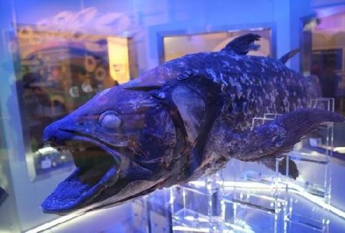 静岡水族館メイン旅行