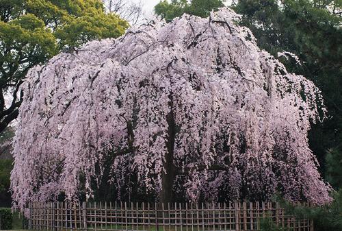 京都御苑を存分に愉しむ大人旅