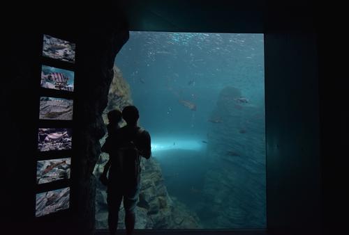 新潟上越市立の水族館「うみがたり」を含む子ども連れ向けおでかけプラン!