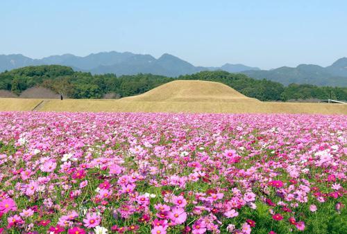 【宮崎秋の花旅】コスモスを巡る秋の花を満喫できるスポット特集!