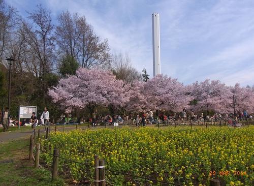 世田谷の絶品パンを持ってお花見に出かけよう!