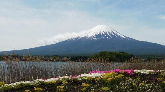 富士山ビューと様々な花
