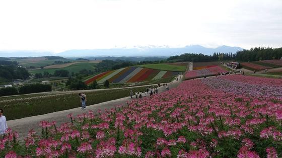 四季彩の丘の風景