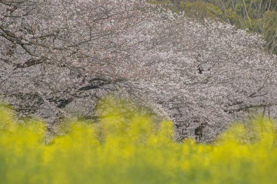 【3月〜4月】西都原古墳群