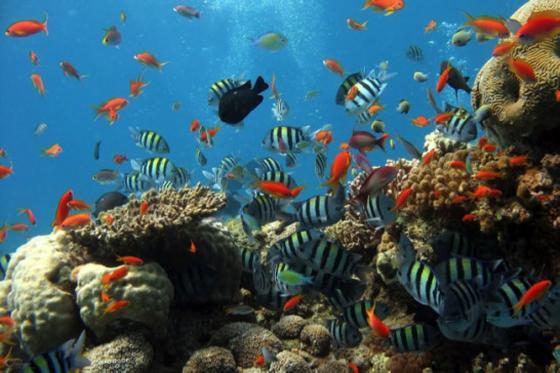 色々な海洋生物たち!