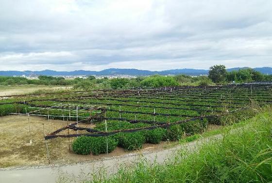 日本遺産!「浜茶」のある景観